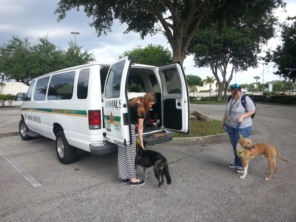 Adoptable Dogs arriving from SACC